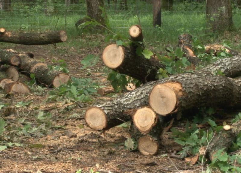padure 1 lemne