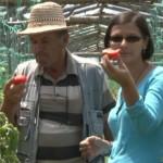 SOLUŢIE: Ardeii, roşiile şi vinetele ar putea fi cultivate pe straturi...