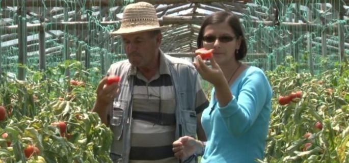 rosii-colibasi