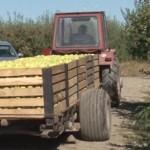 PROTOCOL: Fermierii vor plăti impozitele agricole la primării! Normele...