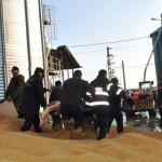 CĂLĂRAŞI: Accident de muncă la un siloz. Doi oameni sufocaţi sub un mu...