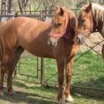 PRAHOVA: Penitenciarul Ploieşti îşi vinde... caii aprobaţi spre casare