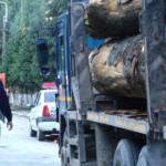 ARGEŞ: Nu valora materialul lemnos câtă amendă au încasat!