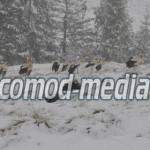 DÂMBOVIŢA: Zeci de berze au aterizat pe vârfurile Bucegilor