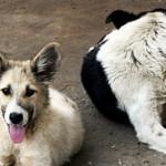 DECIZIE: Curtea de Apel Bucureşti a suspendat legea eutanasierii câini...