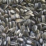 PRAHOVA: Avea la vânzare 7.830 de pungi de seminţe de floarea soarelui...