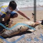 ADOPTĂ UN DELFIN! Fii și tu părintele adoptiv al unui delfin din Marea...
