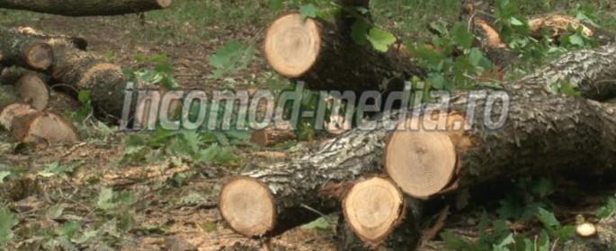 padure-1-lemne