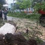 TELEORMAN: Prăpădul de după furtună: zeci de copaci smulşi din rădăcin...