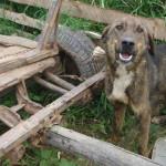 DÂMBOVIŢA: Cruzime faţă de animale la Dragomireşti! Asociaţia Sufleţel...