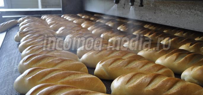 fabrica paine urlati 2