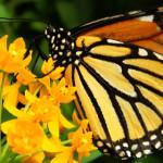 TIMP LIBER: Expoziţie de fluturi tropicali vii la Muzeul Antipa din Bu...