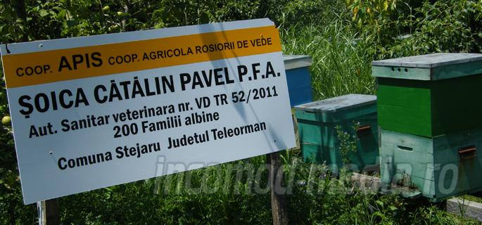 apicultor teleorman 1