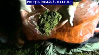 cannabis prahova