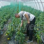 PROIECTE: Agricultorii români au reuşit să acceseze 7 miliarde de euro...