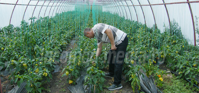 cezar aspra teleorman avocat agricultura 1