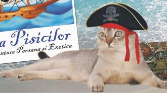 corabia pisicilor
