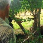 DÂMBOVIŢA: Urs rămas captiv într-un gard în zona satului Dealu Frumos!