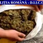 PRAHOVA: Coletul cu droguri! Poliţiştii au destructurat încă o reţea d...