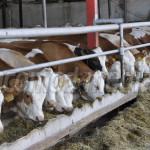 PRO AGRO: Crescătorii de animale cer să nu se introducă  vaccinarea pe...