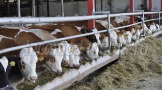 slovacia 4 vaci