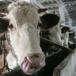 Creşti animale şi vrei AJUTOR DE STAT? Depune cererea până pe 15 decem...