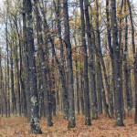 PRAHOVA: Parchetul verifică retrocedările de pădure din perioada 2006-...