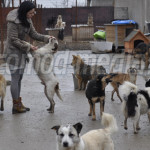 """DĂRUIRE: În adăpostul """"Wonderland"""" de la Târgovişte, câinii uită traum..."""