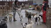"""DĂRUIRE: În adăpostul """"Wonderland"""" de la Târgovişte, câinii uită traumele prin care au trecut! FOTO"""