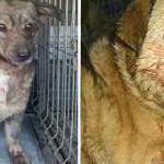 SCHIMBARE: CLM Târgovişte sterilizează câinii cu stăpân şi concesionea...