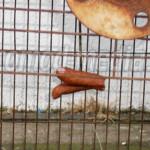 SEMNAL: Unde şi prin ce metodă dispar câinii momiţi de salariaţii Oţel...