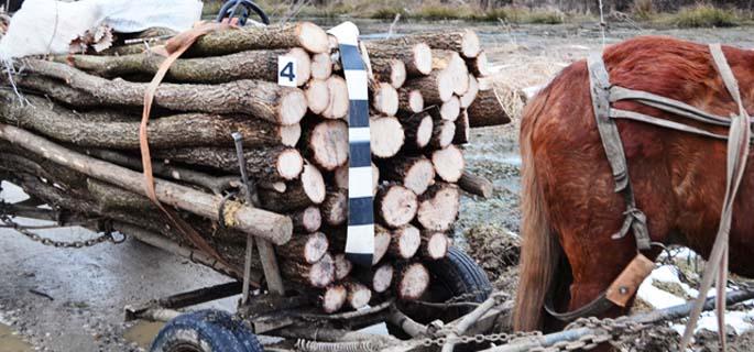 lemne caruta 3