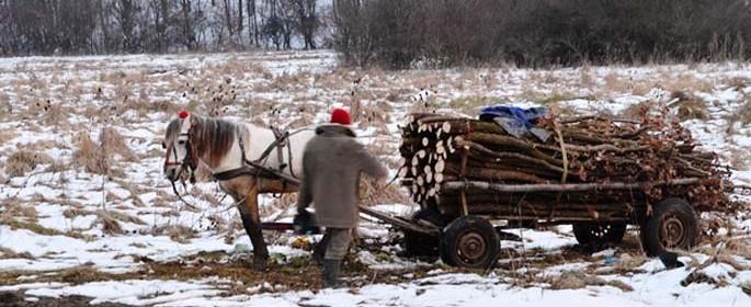 lemne caruta 4