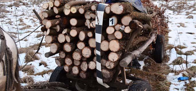 lemne caruta 5