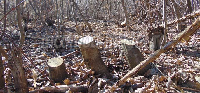 furt lemne 7