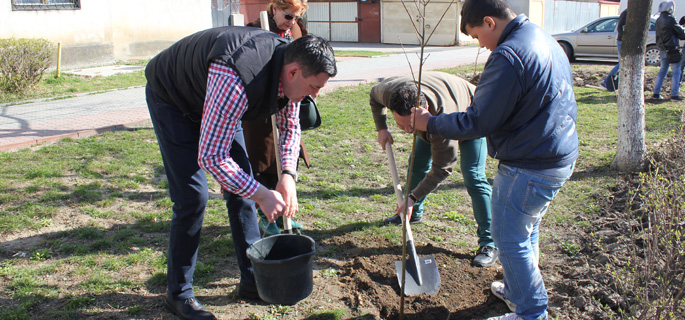 plantare arbori titu 2