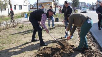 plantare arbori titu 3