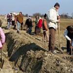 DÂMBOVIŢA: Primăria Poiana înfiinţează perdele de protecţie de-a lungu...
