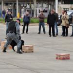 EXERCIŢIU: Câinii şi poliţiştii şi-au dovedit abilitatea de a repera c...