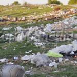 FOTO: Crimă împotriva naturii la Perşinari!