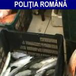 IALOMIŢA: Dosare penale pentru braconaj piscicol şi comerţ ilegal cu p...