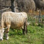 REGLEMENTARE: Este utilizator de păşune şi fâneţe şi fermierul care nu...