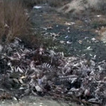 DÂMBOVIŢA: Experţii de mediu discută cu locuitorii din Mătăsaru despre...