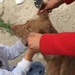 WONDERLAND: Copiii au arătat că afecţiunea dintre om şi câine poate fi...