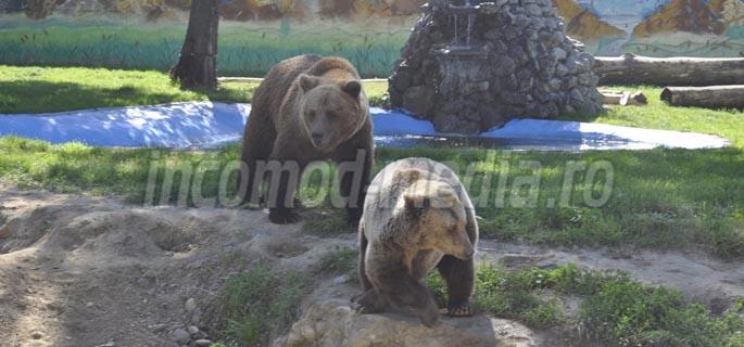 zoo targoviste 4