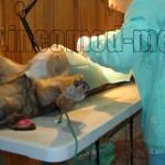CAMPANIE: Ai câine de rasă comună? Primăria Târgovişte te ajută să-l s...