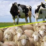 EXPOZIŢIE: Târgul de Zootehnie al României, 26 - 29 iunie, lângă Vatra...