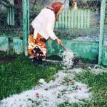 DÂMBOVIŢA: Grindina a distrus culturile agricole pe zeci de hectare în...