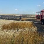TELEORMAN: Cioburile de la marginea drumului au aprins un lan de grâu ...