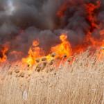 ATENŢIE! Fermierii care ard miriştile şi resturile vegetale rămân fără...